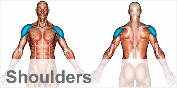 A muscular anatomy diagram with the shoulder muscles highlighted.
