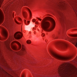 image of blood cells flowing through an artery